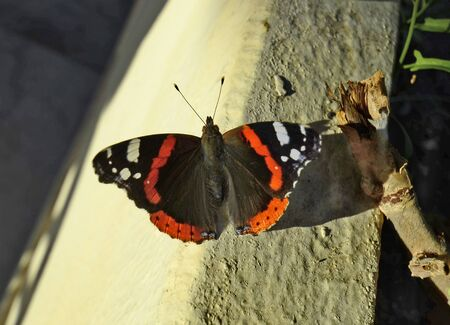 admiral: Greece, red admiral butterfly