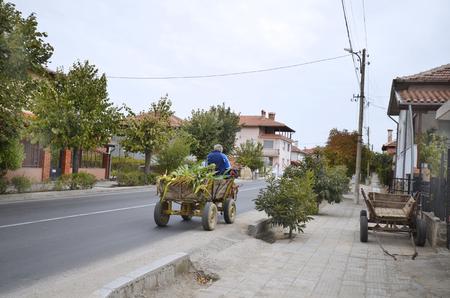 campesino: Bulgaria, campesino de edad en su carro de burro - el modo habitual de transporte en las zonas rurales