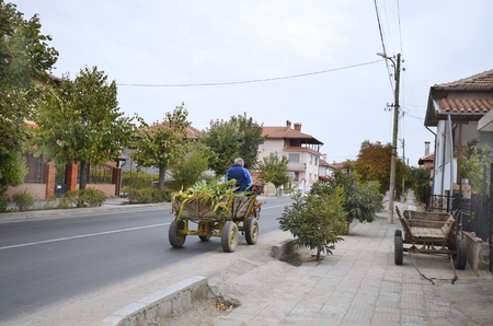 peasant: Bulgaria, old peasant on his donkey cart - usual mode of transport in rural areas Stock Photo