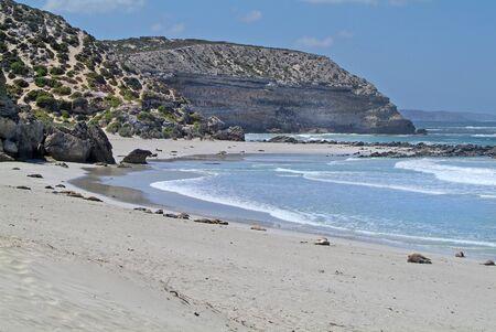 kangaroo island: Australia, australian sea lions on seal bay, Kangaroo Island