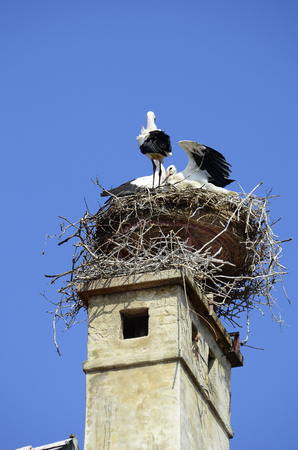 zoology: Austria, stork nest on roof top in Rust village