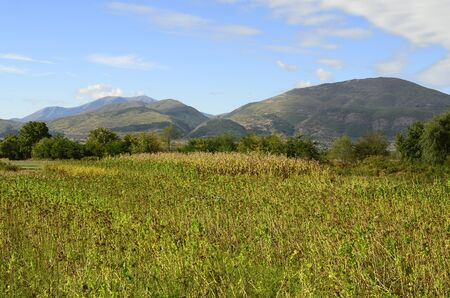 rural area: Bulgaria, tobacco fields and corn fields in the rural area near Greek border