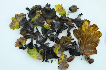 edible leaves: edible mushrooms and autumn leaves