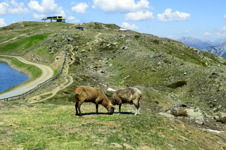 chair on the lift: Austria, Tirol, sheeps on alpine pasture and summit station of chair lift