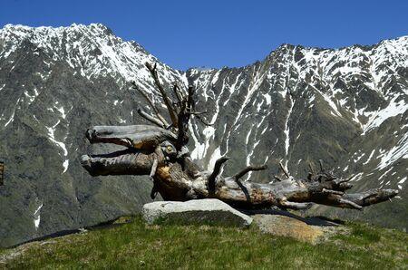 tirol: Austria, Tirol, funny sculpture made from tree stump in Austrian alps