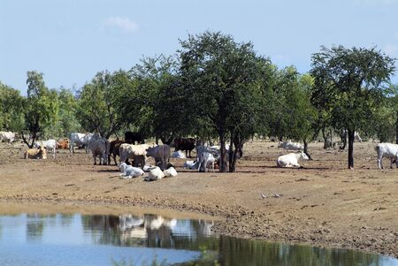 territory: Australia, cattle station in Northern Territory