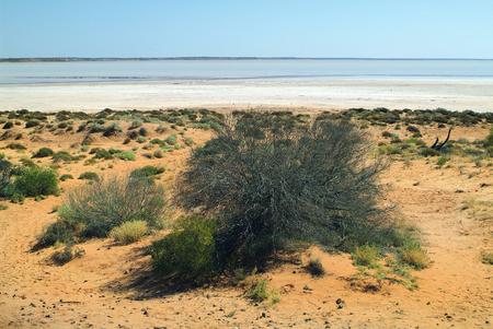 hart: Lake Hart in South Australia Stock Photo