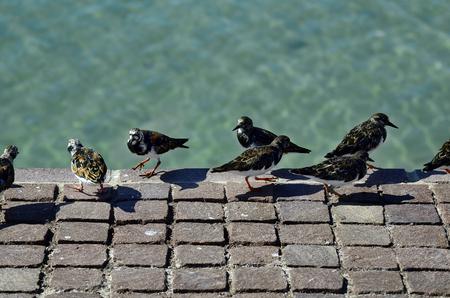 Spain, Canary Island, Fuerteventura, stone waltz bird Stock Photo