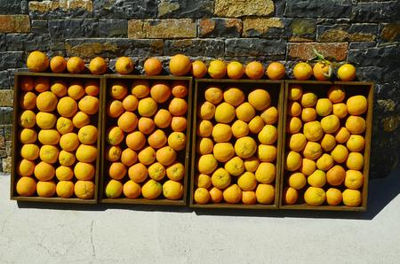 Greece, Crete, kind of presentation of orange fruits. Stock Photo