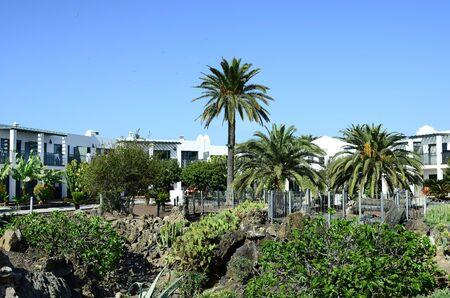 Corralejo, Fuerteventura, Spain - March 29, 2017: Tropical vegetation in garden of hotel complex Marismas on Canary island