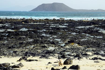 Spain, Canary Island, Fuerteventura, rocky coast with Los Lobos island behind