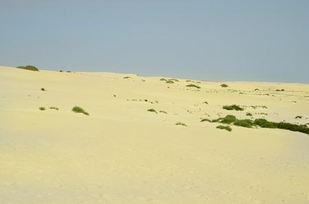 Spain, Canary Island, Fuerteventura, dunes in nature park El Jable