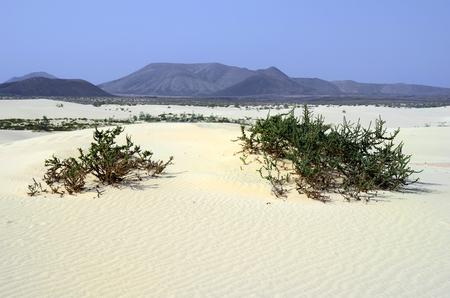 Spain, Canary Island, Fuerteventura, landscape in nature park El Jable Stock Photo
