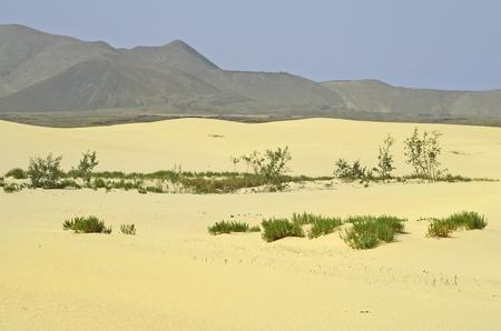 Spain, Canary Island, Fuerteventura, landscape in nature park El Jable Lizenzfreie Bilder