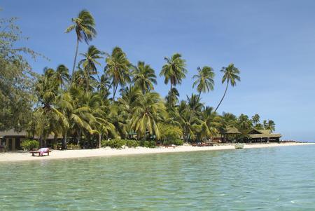 Fiji, beach with palm trees on Malolo Lailai island