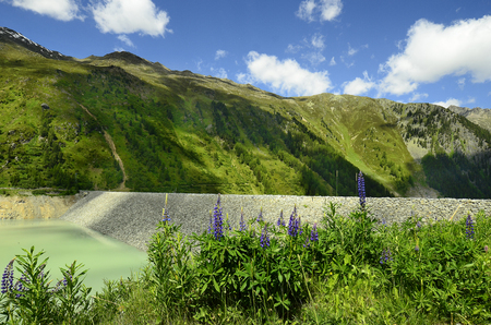 Austria, dam of water reservoir named Gepatsch Stausee and lupin flowers in Austrian Alps, Tirol Stock Photo