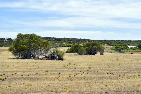 オーストラリア、グレアフル地区の木々に寄りかかっている