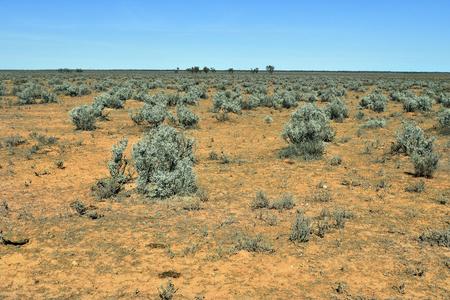 Australia, landscape with bushes in Victoria 写真素材