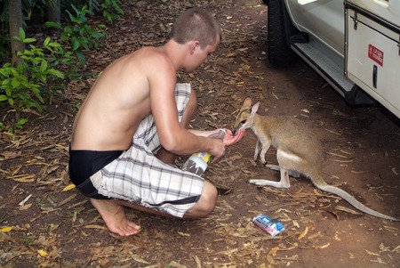Mataranka, Australia - April 21st 2012: Unidentified man feed confiding and thirsty wallaby with water
