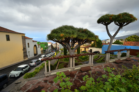 Tenerife, Canary Island, Spain - April 07, 2018: Townsape with dragon trees in mountain village La Orotava