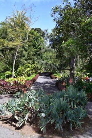 Tenerife, Canary Islands, Spain - April 12, 2018: Unidentified people in botanical garden of Puerto de la Cruz