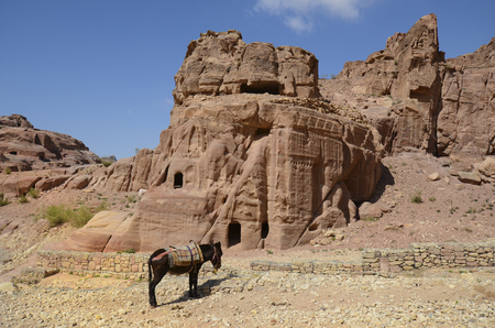 Jordan, donkey and impressive monuments in ancient Petra, preferred travel destination and Unesco World Heritage site in Middle East