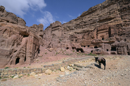 Jordan, donkey and impressive architecture in ancient Petra, preferred travel destination and Unesco World Heritage site in Middle East