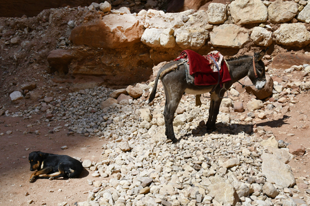 Jordan, donkey and dog rest on a sunny place in Unesco World Heritage site of ancient Petra