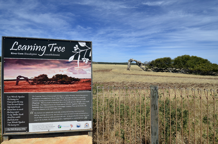 Greenough, WA, Australia - November 24, 2017: Board with description of  - The Leaning Tree - an eucalyptus tree in rural landscape of Western AUstralia
