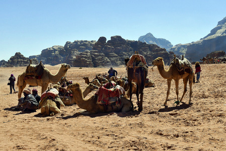 Wadi Rum, Jordan - March 07, 2019: Unidentified people, Bedouin and camels in the UNESCO World heritage site in Middle East