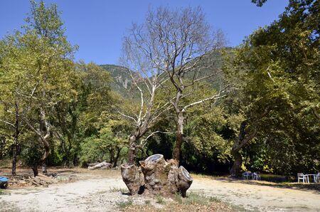 Greece, Epirus, landscape with trees along Louros river 版權商用圖片