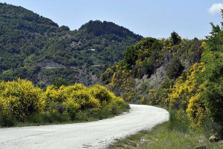 Greece, Epirus, mountain road between flowering broom bushes in National Park of Tzoumerka, Peristeri, Arachthos Gorge and Acheloos Valley in Pindos range