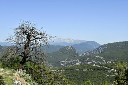 Greece, Epirus, dead tree in landscape with pindos range in Aoos-Pindos national park
