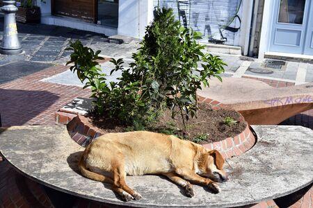 Greece, Ioannina, dog sleeping on bench in pedestrian zone