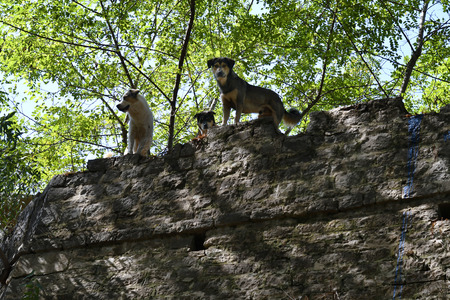 Greece, Epirus, dogs as animal guards on wall of the medieval castle in Preveza