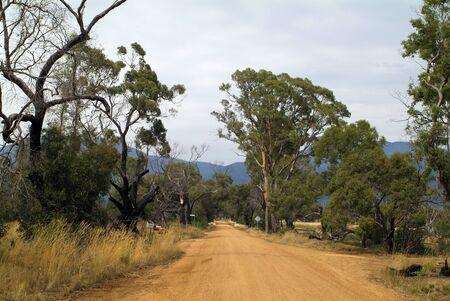 Australia, unsealed road and eucalyptus trees 版權商用圖片