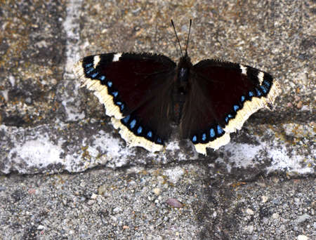 Butterfly on pavement photo