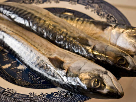 salmonidae: three trouts on a plate