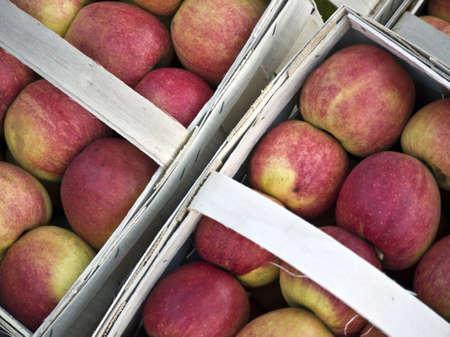 paniers avec des pommes en rouge et vert Banque d'images - 12025006