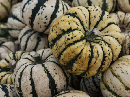 Pumpkin - a species-rich vegetables in the autumn, here in the variation Sweet Dumpling