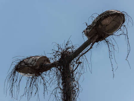 Street lights at the station of Wusterhausen-Dosse, Ostprignitz-Ruppin, state Brandenburg, Germany - from nature reclaimed.