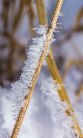 Crystals of snow on the branches