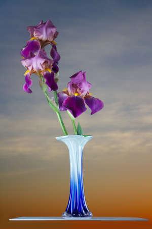 Bouquet deep purple iris flower photo