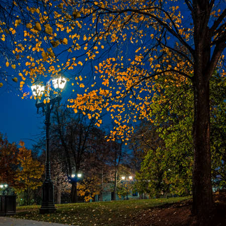 Autumn in the park bright translucent leaves of trees under a lamp on a quiet night photo