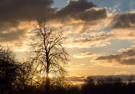 Silhouettes of trees on a sunset background and a flock of birds flew Stock Photo