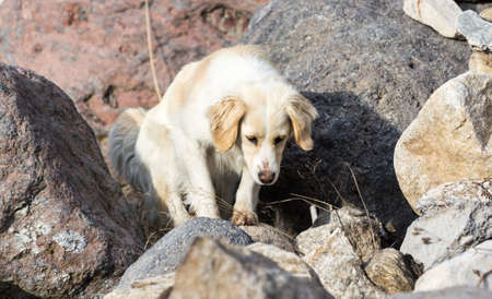 Young stray dog ​​hunts of large boulders Stock Photo