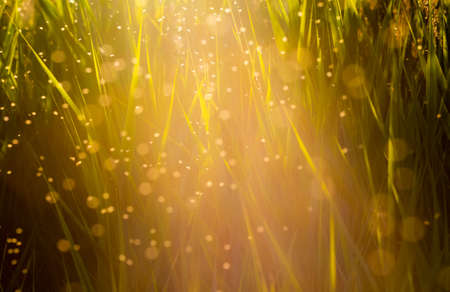 Midges flying in the tall grass in the sun Stock Photo