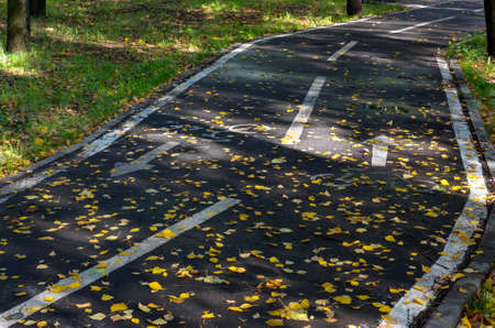 Paved bike path marked out marks backfilled autumn leaves on the green field