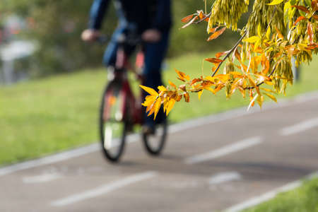 Tree branch with yellow and orange leaves and cyclist on an asphalt bike path in the background Stock Photo