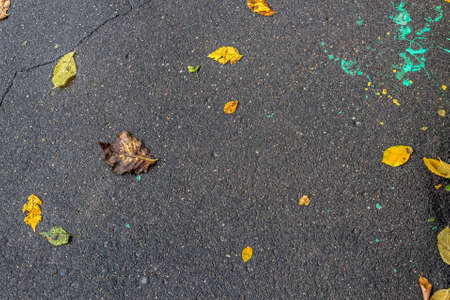 Autumn bright leaves on asphalt texture